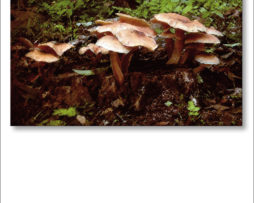 FUNGHI-IMAGES-A-1-2
